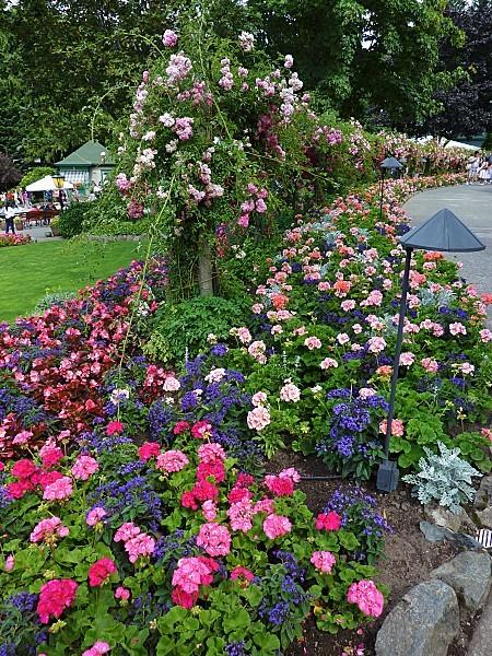 Jour 24 Butchart Gardens parterres