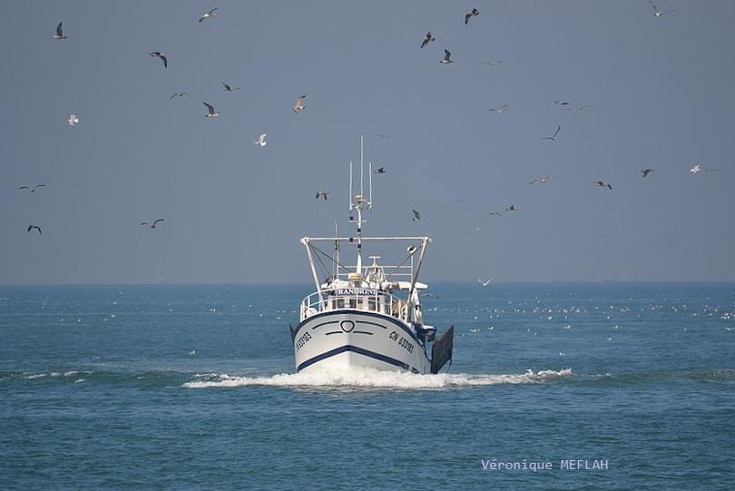 Calvados : été 2018 : Trouville-sur-Mer : Retour de pêche