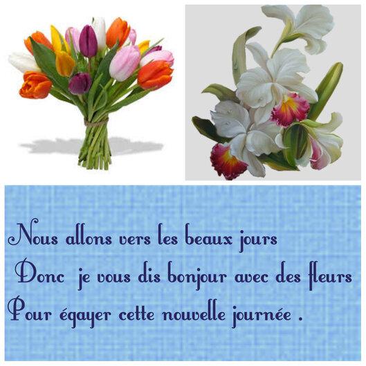 Fleur Lis des Cafres fini ♣.mercredi ♣♣