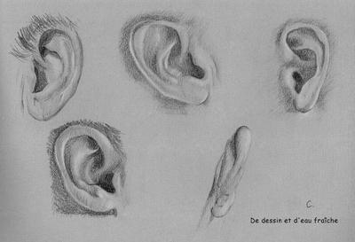 Planche d'oreilles