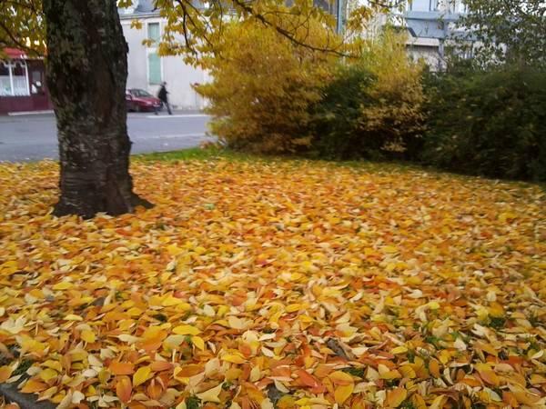 Parterre-de-feuilles.jpg