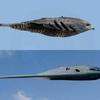 B-2 et mère nature- comparaison