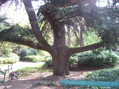 283- un arbre au choix-Mildéfis