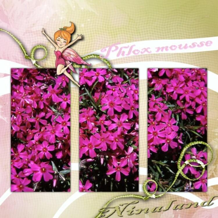 De Belles Plantes Couvre-Sol