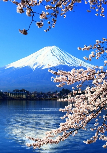 mount-fuji-and-sakura-or-cherry-blossoms-at-lake-kawaguchi-japan-1600x2292-634x908