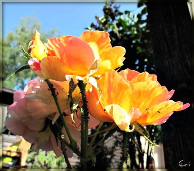 fleurs 4182-1