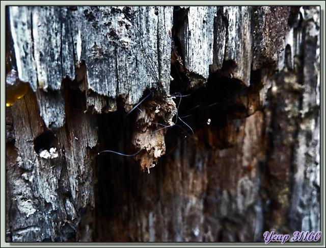 Blog de images-du-pays-des-ours : Images du Pays des Ours (et d'ailleurs ...), Circuit Ours quelque part dans les Pyrénées