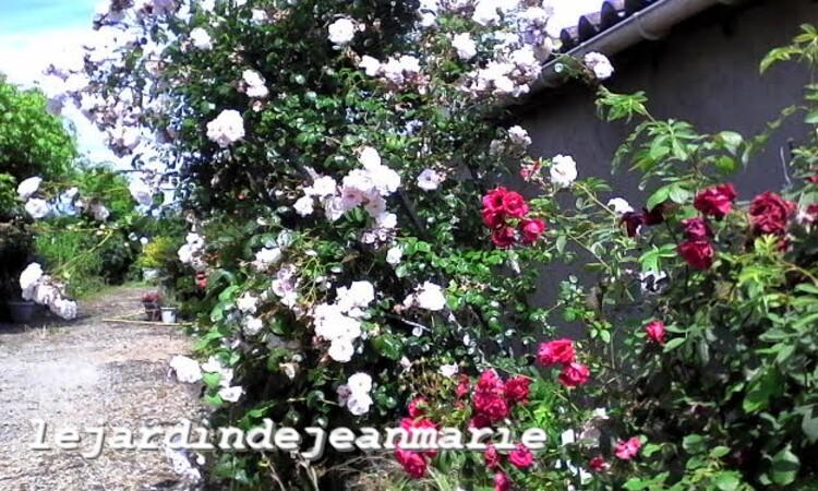 je Jardin de Jean Marie ,ma Roseraie 3 reconnaissance des végétaux @