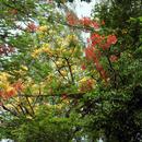 Forêt de Vatable (Les Trois-Îlets) - Photo : Gaëlle
