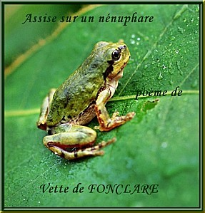 15-grenouille-grenouilles-crapauds-animaux.jpg