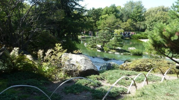 Jardin japonais (8)
