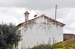Barrage de Põvoa, paradis des cigognes...