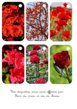 Cartonnettes fleurs rouges