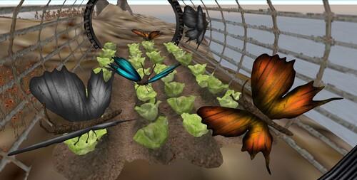 Papillons dans toiles d'araignée!