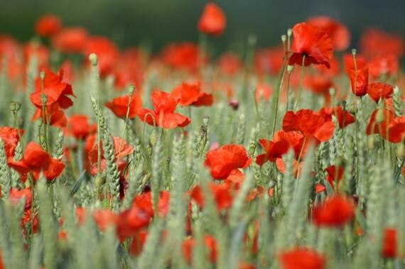 Lettre aux agriculteurs - par Fadi Kassem porte parole de l'Alternative Rouge Tricolore (IC.fr-