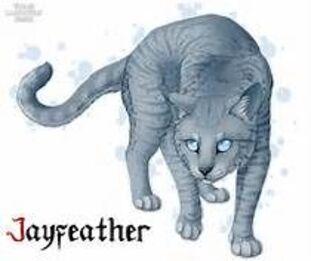Description de chats LGDC  II