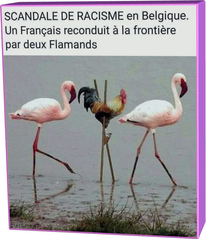 Scandale (Humour)