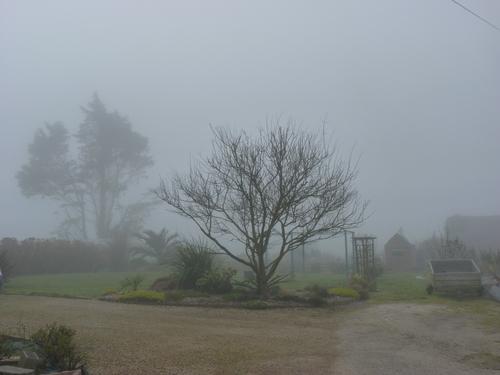le jardin dans le brouillard