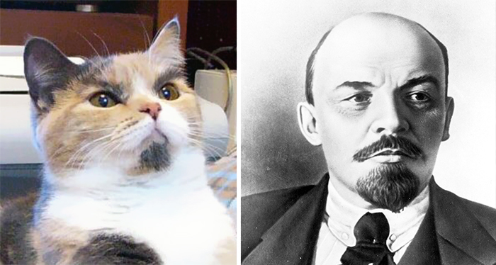 cat-looks-like-other-thing-lookalikes-celebrities-8__700