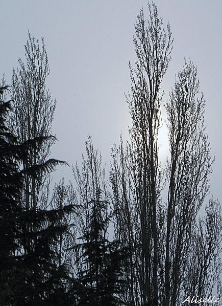 Arbres--Charly-en-hiver.jpg