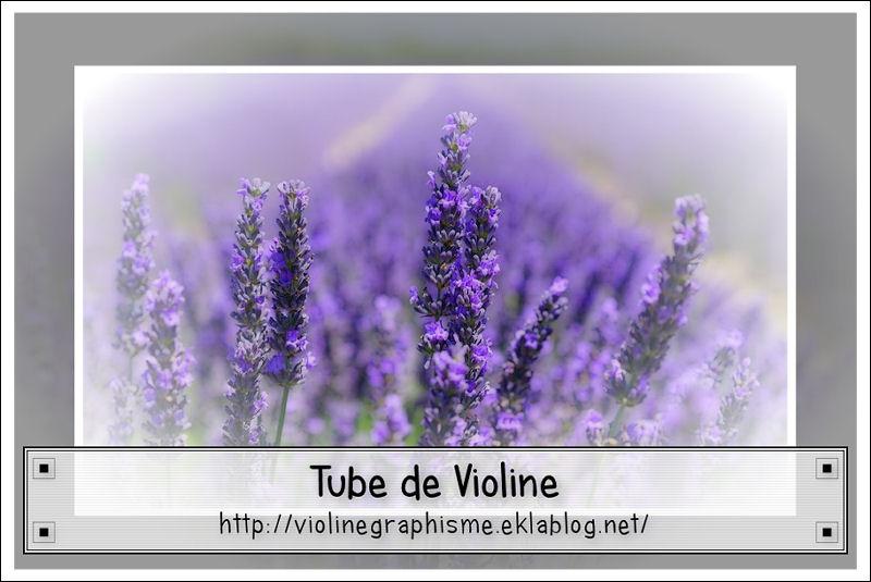Fleurs - Champignons - Nature Misted