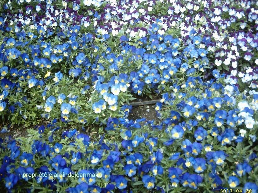Les couleurs du  printemps Zoum sur le bleue photos de mon jardin