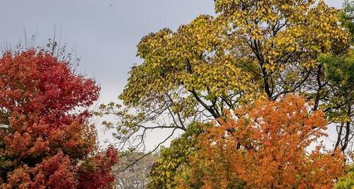 10.000 espèces d'arbres dans le monde menacées d'extinction