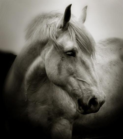 Belles images de chevaux.