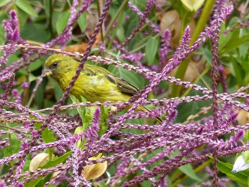 un superbe petit oiseau très coloré