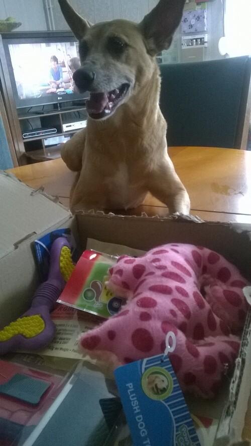 doggybox le temps des pique-niques de juin 2015