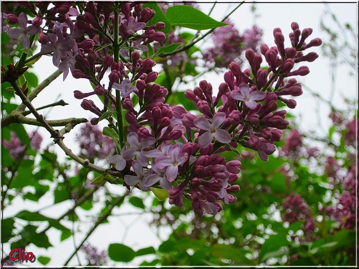 Cartes fleuries pour ce lundi 13 mai 2013