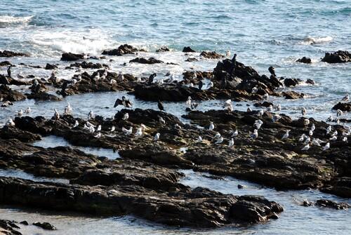Mouettes et cormorans profitent su soleil