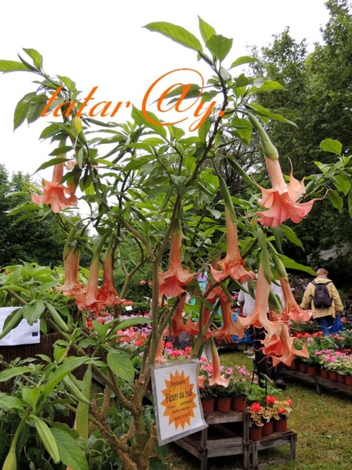 Les fleurs à la fête Du domaine de Péré.