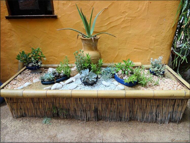 Plantes grasses (Parc floral Court d'Aron)