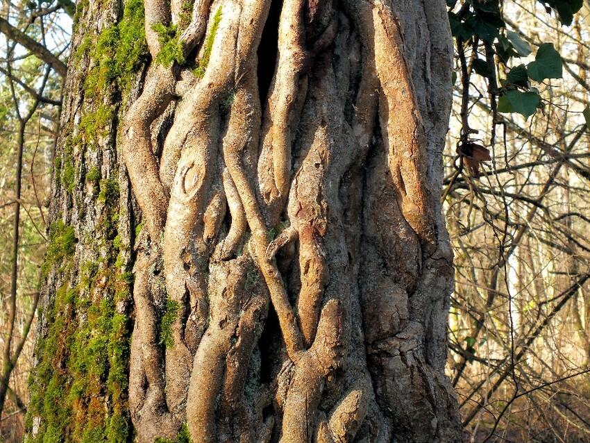 des racines et des fleurs