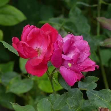 "Mi-juillet dans le ""grand"" jardin..."
