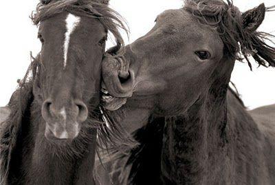 www.pegasebuzz.com   Equestrian photography : Roberto Dutesco