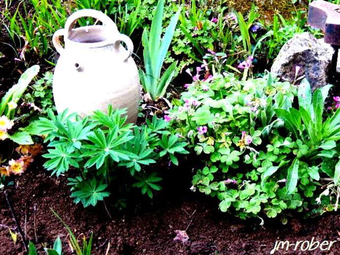 Le jardin poursuit son éveil précoce.........