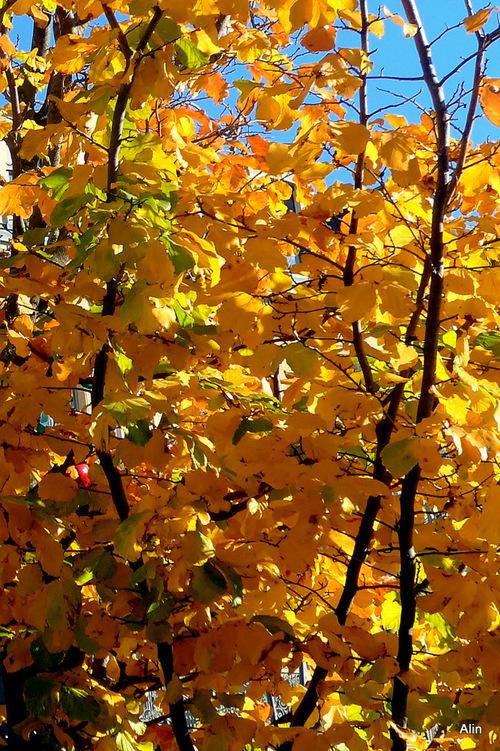 Les feuilles d'automne (jeu!)
