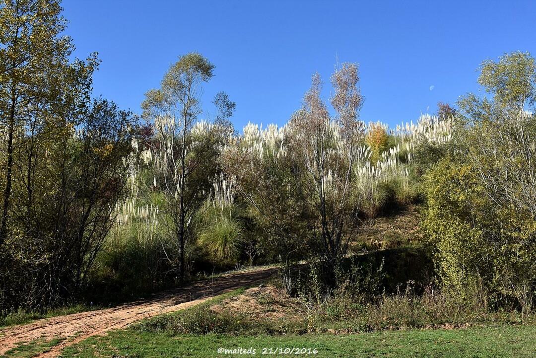 L'automne à Le Garric/Cagnac-les-Mines (81)