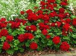 Belle floraison au jardin