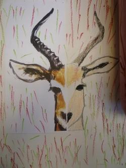 Symétrie - animaux d'Afrique