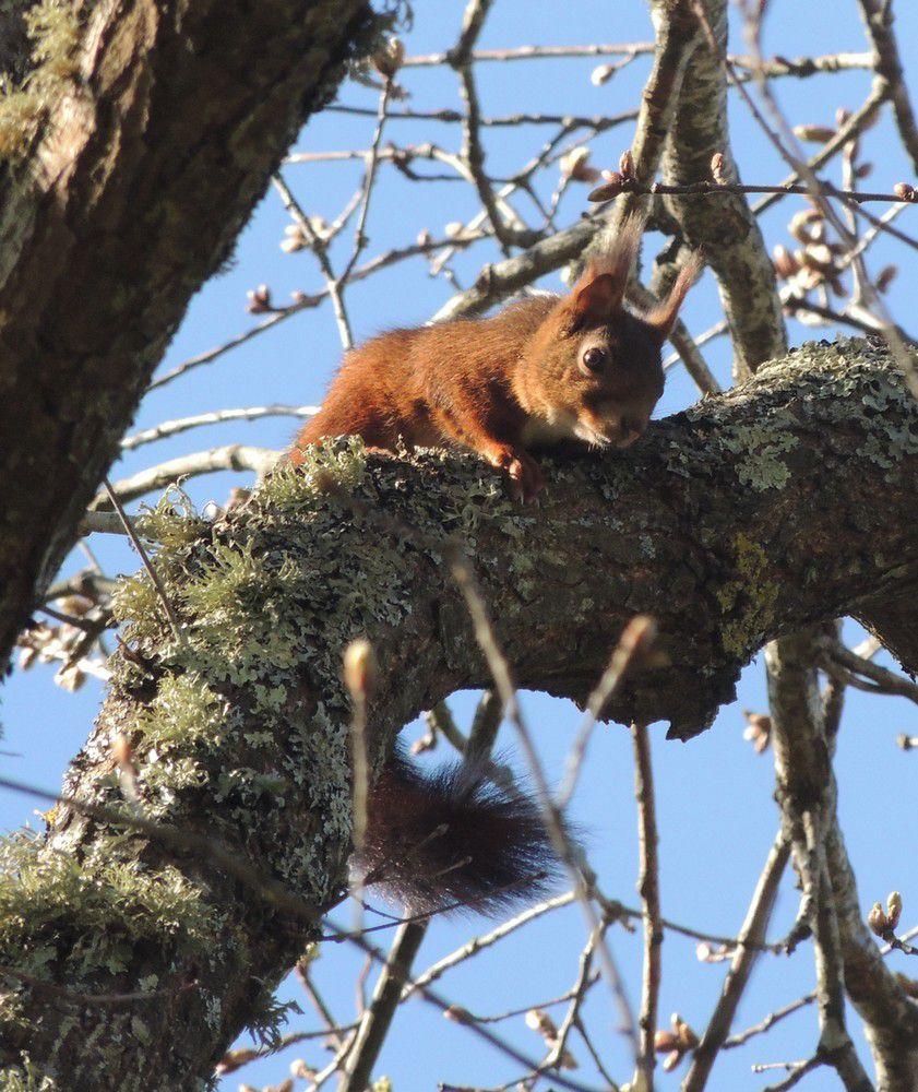 Ecureuil libre et malicieux...