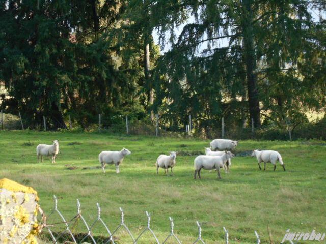 Il pleut, il pleut bergère, rentre tes blancs moutons