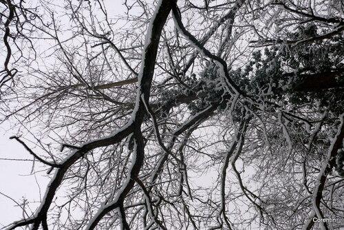 Temps de neige (4)