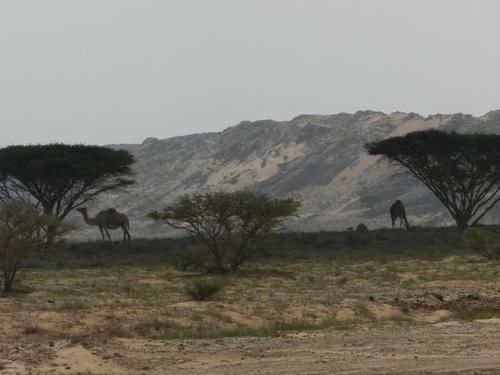 Oman De Mahoot à Ras madrakah...