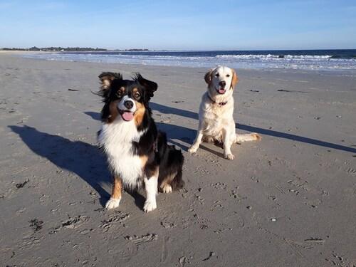 Gipsy et Kelly à la plage