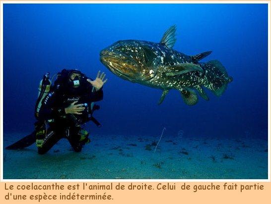 Blog de lesscorpionsdeouarzazate : Les Scorpions de Ouarzazate, LE COELACANTHE