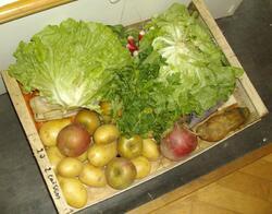 Mes achats de légumes
