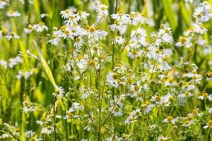 Quelques exemples de plantes